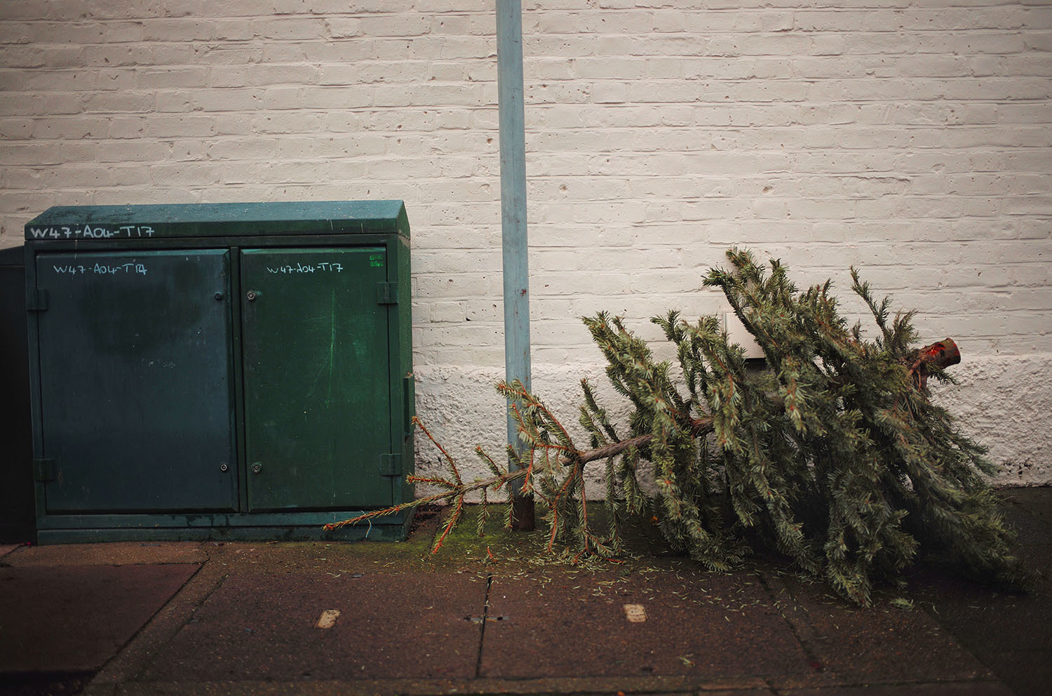 of christmas trees on the pavements outside houses is almost brutal the trees lie there in various poses waiting to go the big mulcher in the sky